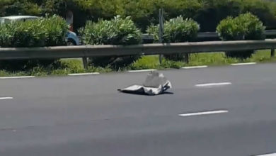 Photo of Sorèze : Un morceau de métal cause des dégâts sur l'autoroute
